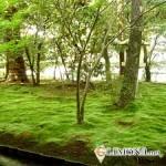 Дренаж для газона