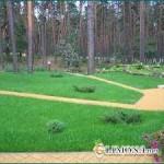 Использование газонов в ландшафтном дизайне