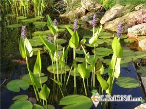 Красивый пруд своими руками на даче или в саду