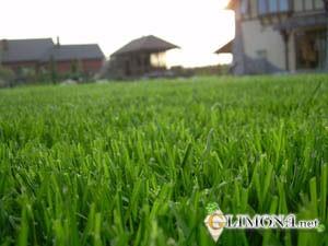 Ландшафтный дизайн — газоны и цветники