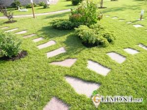 Прокладка садовых дорожек – планировка и материалы