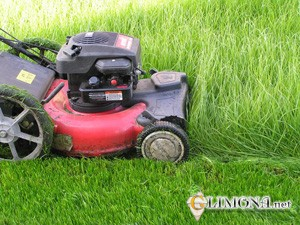 Стрижка и подкормка газонов
