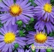 Цветы в емкостях и контейнерах