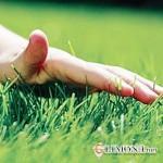 Какой выбрать газон?