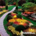Лучшие идеи для ландшафтного дизайна: клумбы тюльпанов