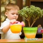 Как подобрать комнатные растения для придания уюта детской комнате?