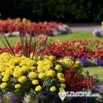 Основные принципы создания цветников