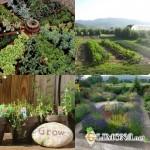 Садово-парковое искусство вчера и сегодня