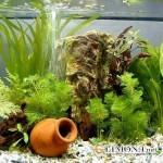 Рай аквариумиста
