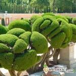 Топиари в вашем саду
