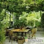 Лианы и виноград в ландшафтном дизайне