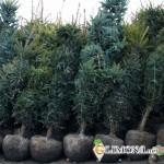 Выбор растений и их посадка