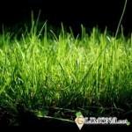 Ваш идеальный газон