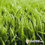 Как определиться с выбором газона