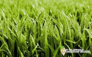 выбрать газон