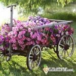 Обустроим свой сад
