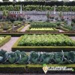 Оригинальный огород на вашем участке