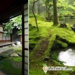 Моховые сады: красота по-японски