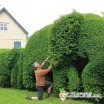 «Живые» изгороди и заборы