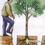Как правильно пересаживать деревья