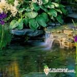 Что нужно знать при выборе растений для водоема