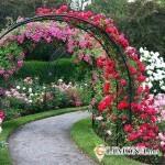 Создание неповторимого сада: арки и крытые аллеи