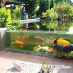 Садовый аквариум: дань моде или удобная альтернатива пруду