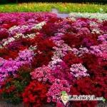 Как сделать красивый цветник на даче