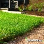Нужен ли зелёный газон у вас во дворе