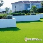Какой газон посадить на даче