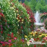 Цветущий сад за вашим окном