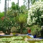 Как создать сад в экзотическом стиле