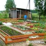 Размещение на участке огорода