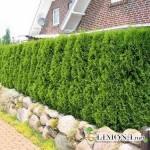 Уход за садом: правильная обрезка деревьев