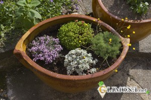 1342682954_alpine_garden_in_a_container