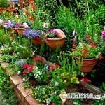 Украшаем участок цветами