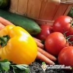 Что выращивать на даче