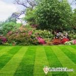 Цветы на участке - неотъемлемый элемент прекрасного сада