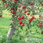 Создаем плодоносный сад