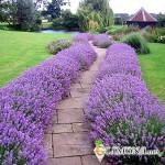 Фэн-шуй для садовых дорожек