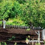 Какие деревья посадить на даче