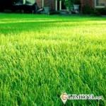 Альтернатива газону — искусственное покрытие