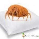 Как избавиться от бельевых клопов - эффективные средства