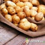 Секреты хранения овощей