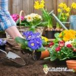 Здоровье в саду