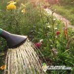 Засуха в саду: как с ней справиться?