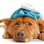 Основы лечения гастрита у собак